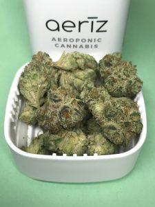 GMO by Aeriz