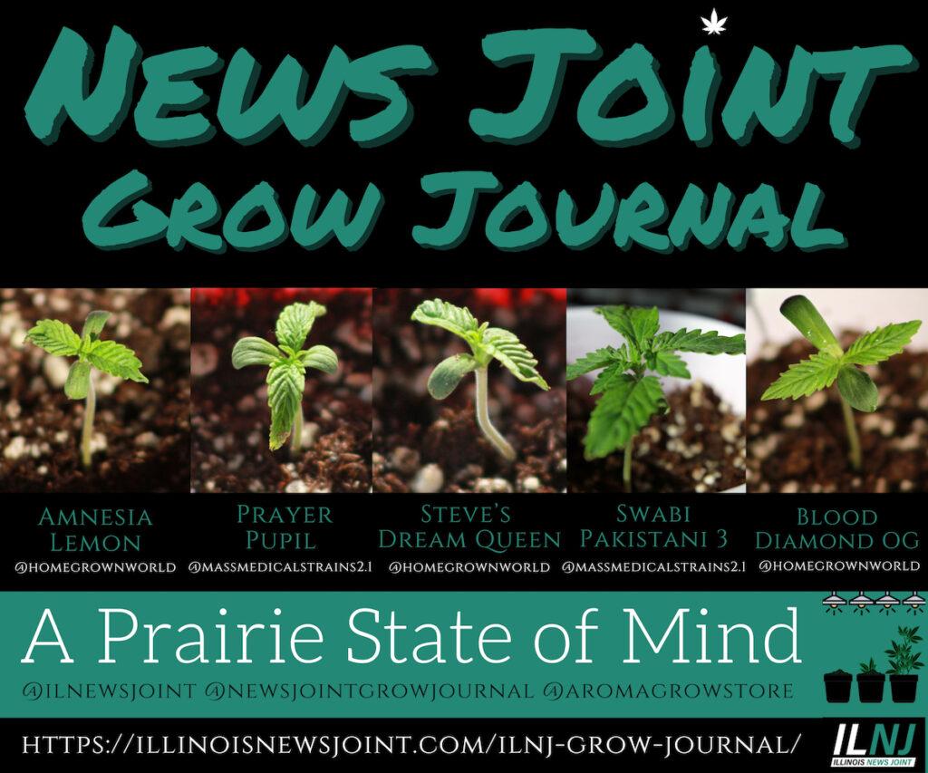 News Joint Grow Journal 2