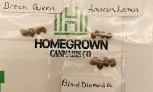 Homegrown Cannabis Co.