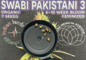 Swabi Pakistani 3