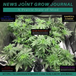 News Joint Grow Journal 9