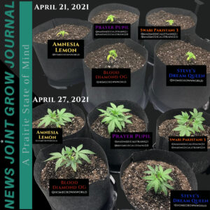 Joint Grow Journal 7: Transplanting