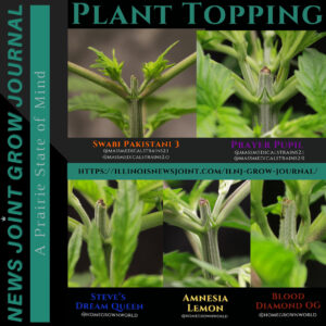 News Joint Grow Journal 8: Topping
