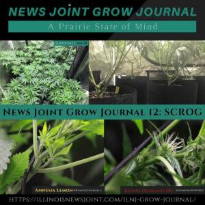 News Joint Grow Journal 12: SCROG