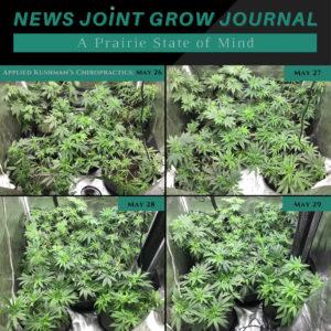 News Joint Grow Journal 10