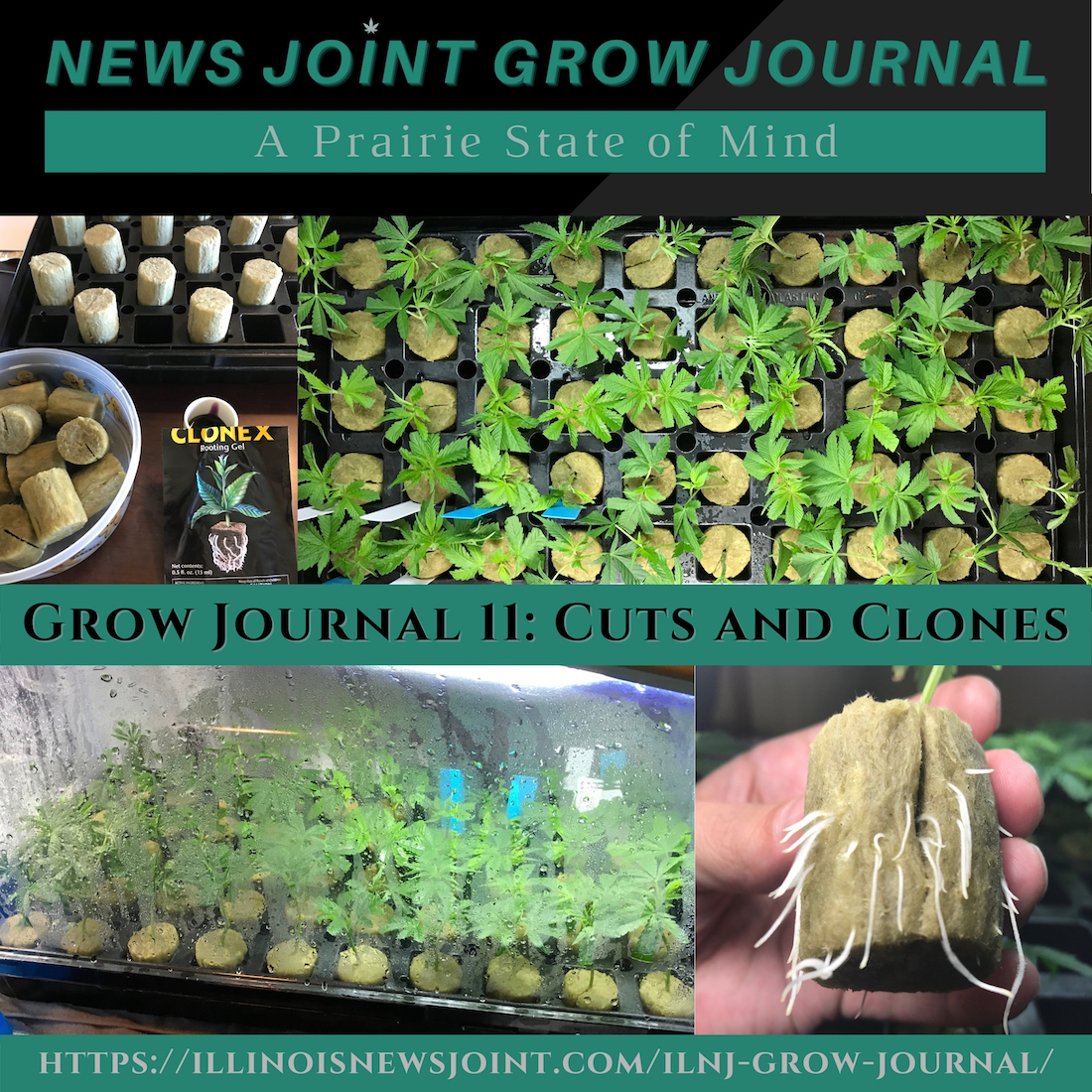 News Joint Grow Journal 11: Cuts and Clones