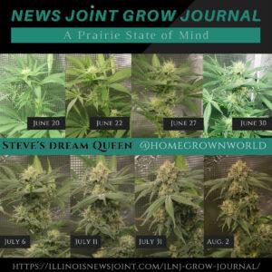 Grow Journal 13: Flowering