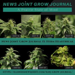 News Joint Grow Journal 15