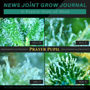 News Joint Grow Journal 14: Trichomes